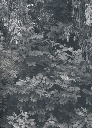 Flora bussiaca