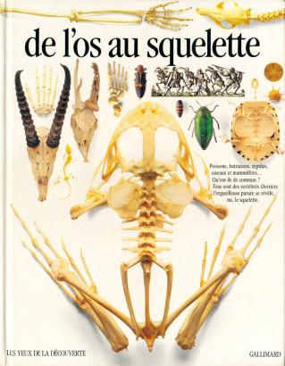 De l'os au squelett