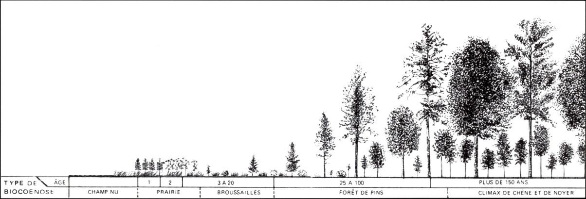 Succession forestière