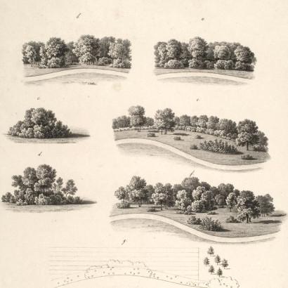 Gruppierungen von Bäumen, Kantenbepflanzung, Straßenbepflanzung
