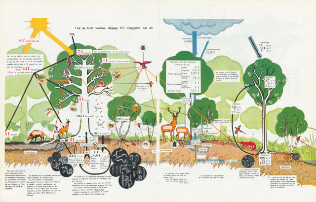 La synthèse écologique