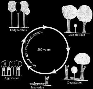 Skov tager en cyklus ca. 280 år