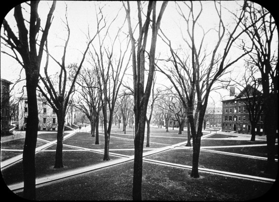 The Harvard yard