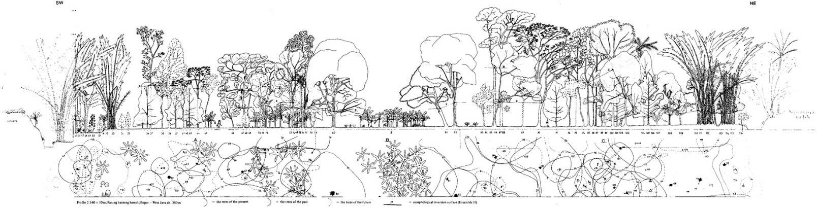 Tropical forest architectural analysis as applied to agroforestry in the humid tropics The example of traditional village-agroforestry in West Java
