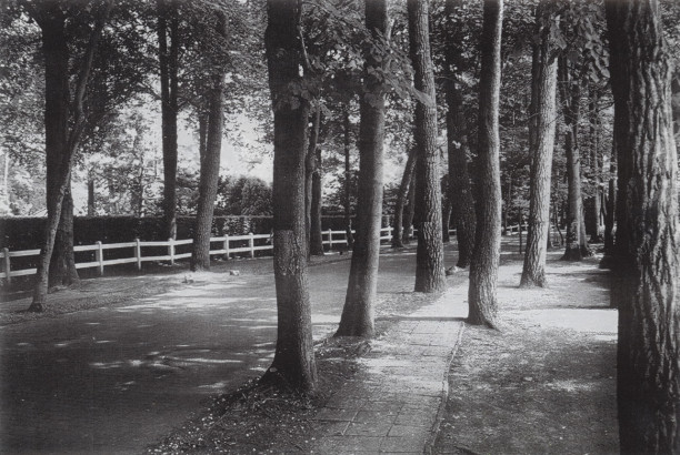 Boslaan, Knokke