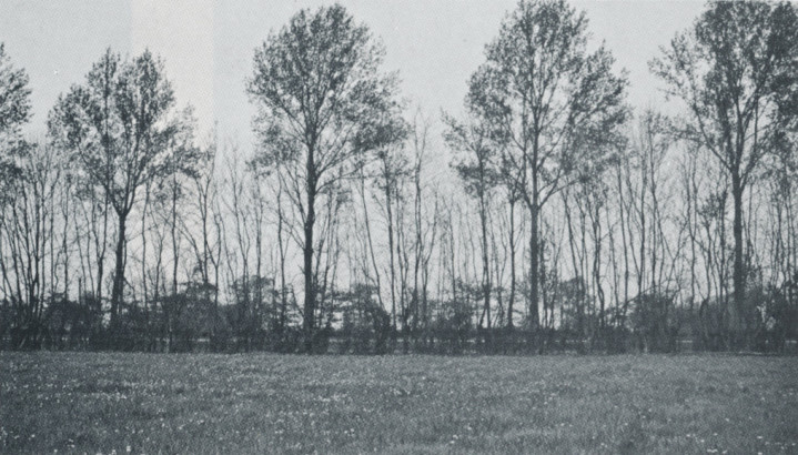 Les grands brise-vent, arbres de haut jet, arbres en cépée, arbustes buissonnants