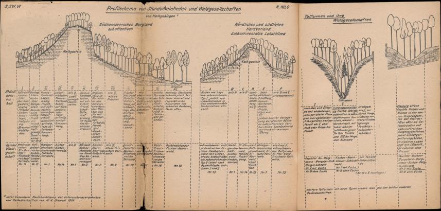 Profilschema von standortseinheiten und waldgesettschaften von Kalkgebirgen